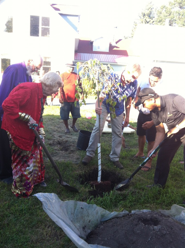 To mark this special occasion, a Mulberry Tree was planted in Fred and Bonnie's front yard. Everyone pitched in to help.